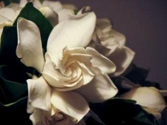 open-jasmine--bride_19-104503